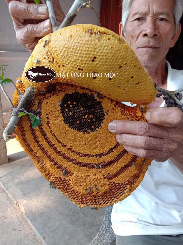 GIA LAI - MẬT ONG RỪNG NGUYÊN TỔ THẢO MỘC  (Loại Ong Ruồi)