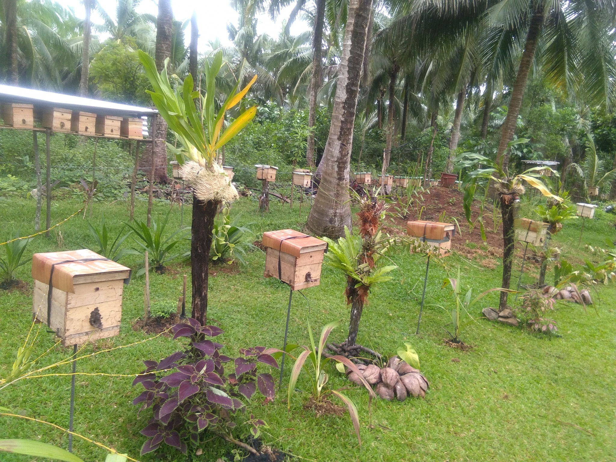 Bán Giống Ong Dú Hồ Chí Minh - Miền Tây Ong Đẹp- Bảo Hành 5 năm